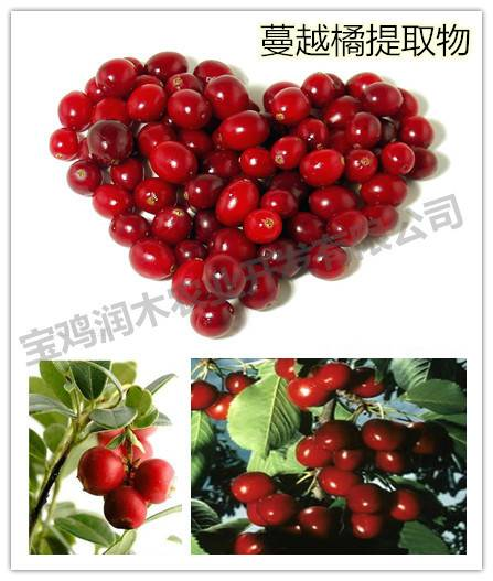 antioxidant ingredients cranberry anthocyanidins 25%