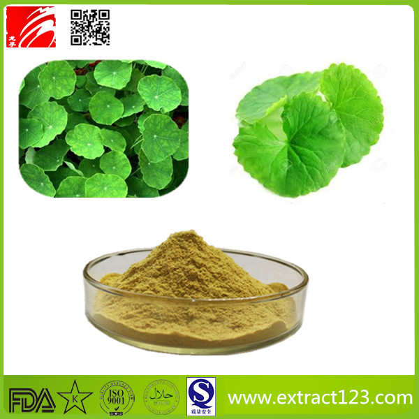 High Quality Centella Asiatica Extract Powder