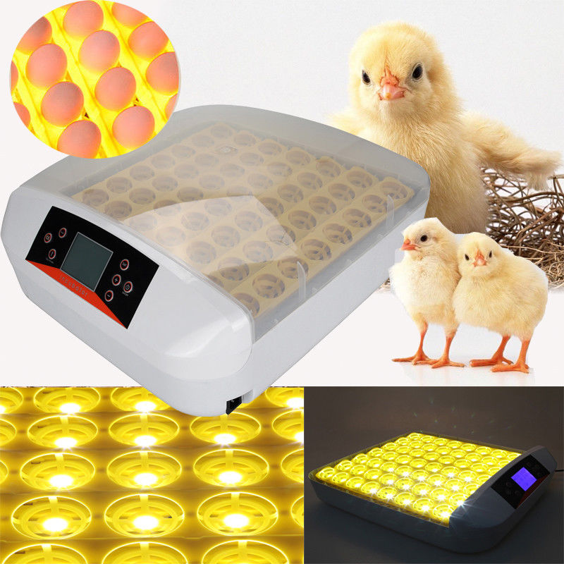 HHD 2017 Full Automatic LED Light Incubator for 56 Chicken Quail eggs