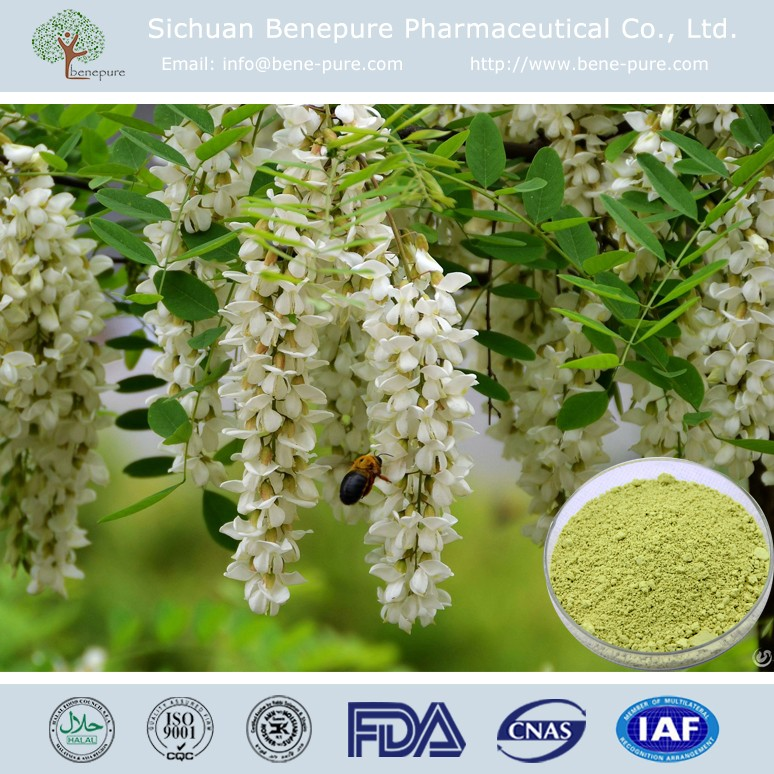 CAS:153-18-4 100% Natural Sophora japonica extract Vitamin P / Rutin
