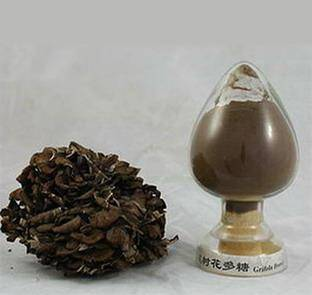 30% high quality Grifola frondosa Extract