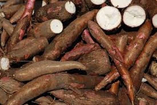 Cassava - Chip / Starch / Flour/ Pellets