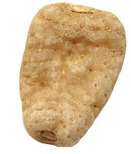 Gastrodia Elata Bl (Tian ma)