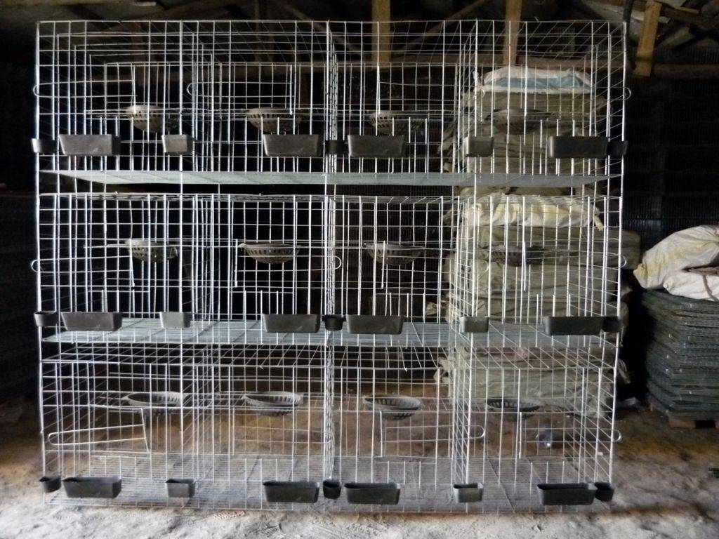 H Type Pigeon Cage Hot Sale in Saudi Arabia Market