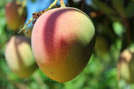 Mango Kiet