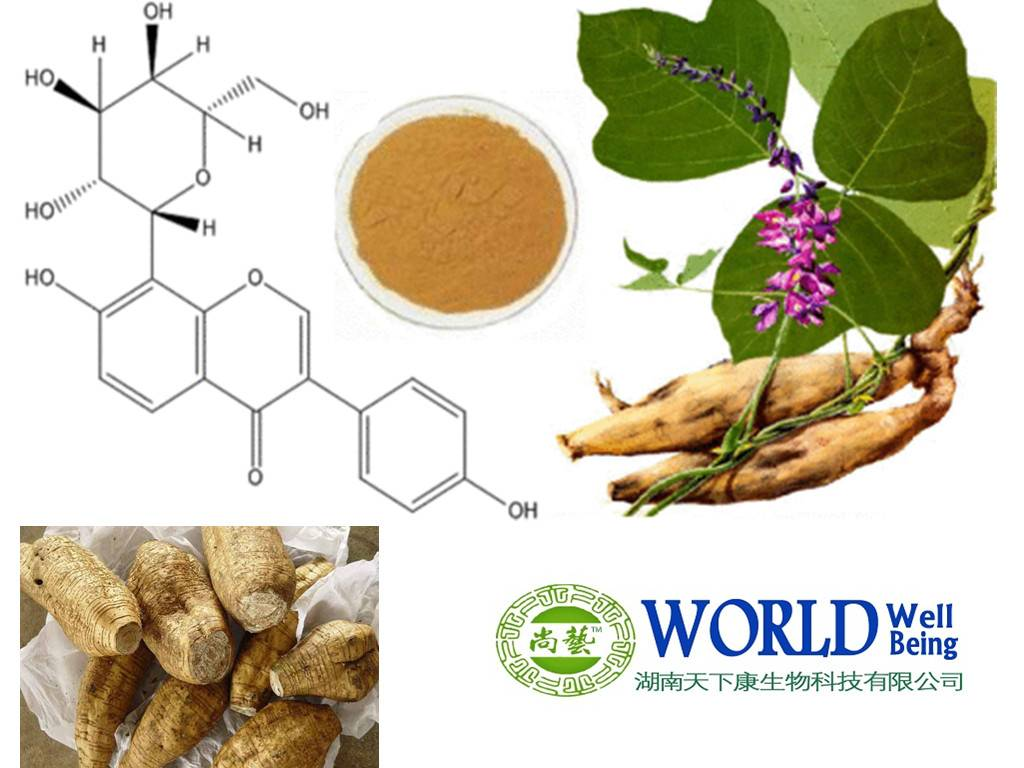 Pueraria Root Extract/Kudzu Root Extract/ With Puerarin Powder