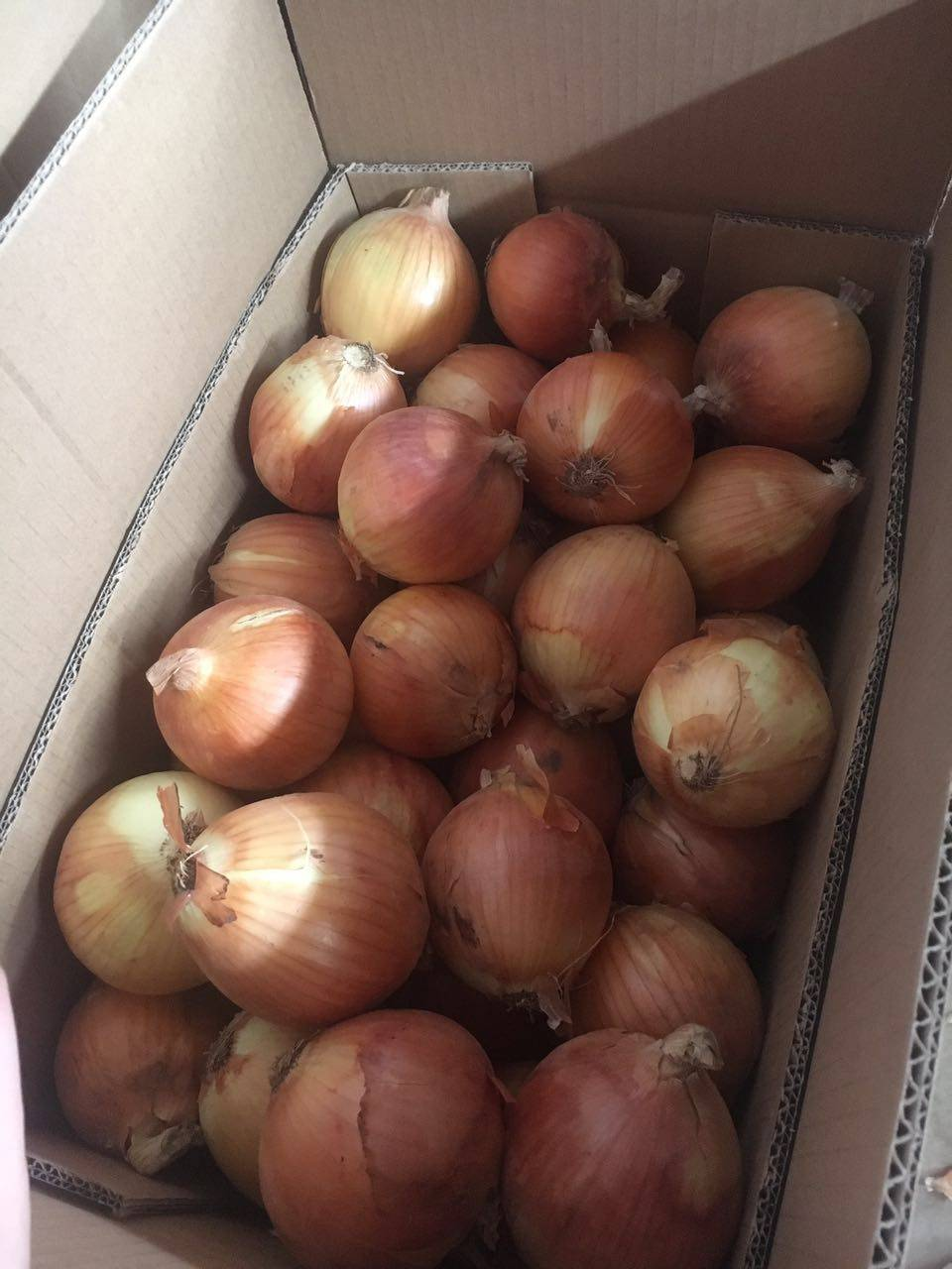 Whole sale fresh yellow onion in China