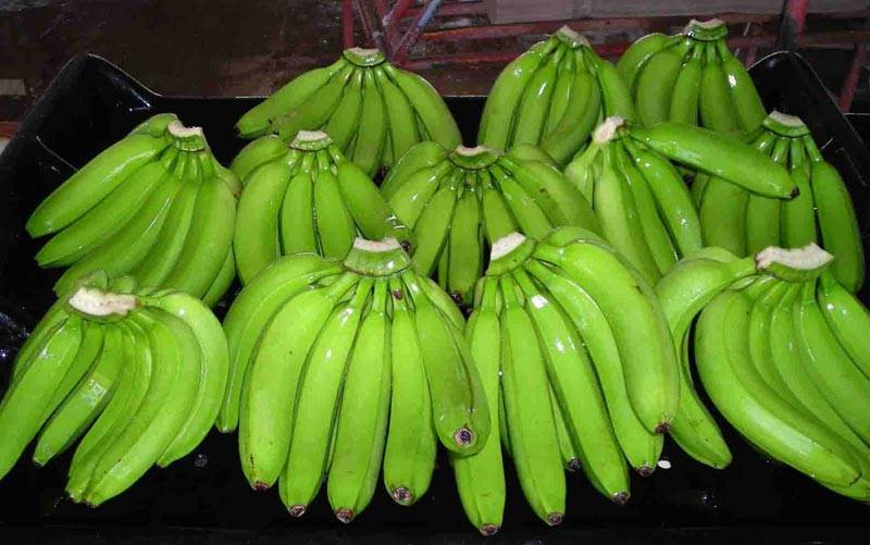 Fresh Cavendsih Banana from South Africa