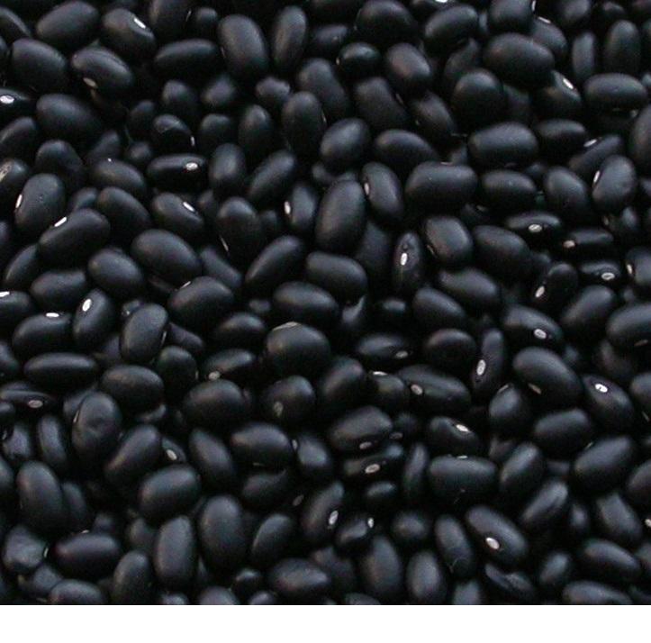 BLACK KIDNEY BEANS WHOLESALE