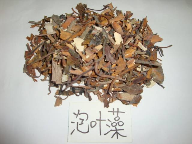 seaweed macrocystis integrifolia