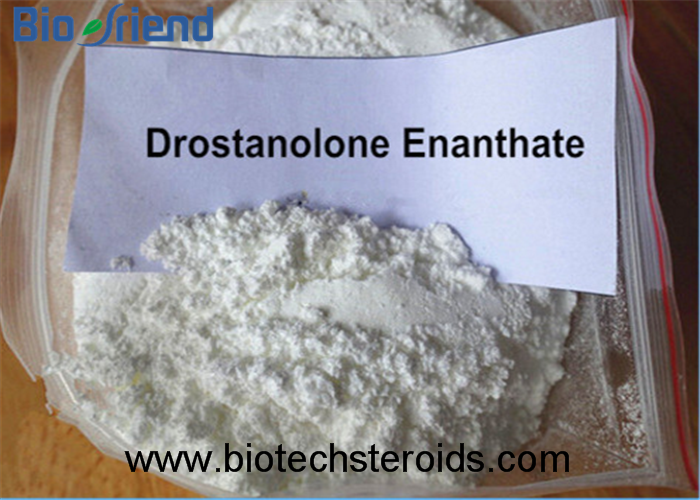 99% Purity Lean Muscle Gain Steroid Hormone Powder Masteron Enanthate Drostanolone Enanthate 472-61-
