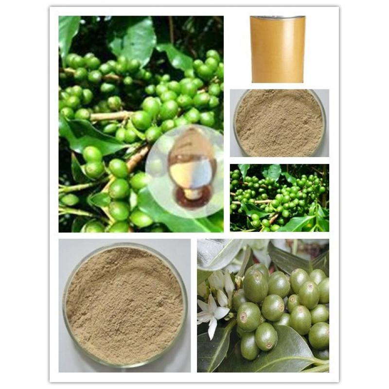 Weight loss product Chlorogenic acid 50% Coffee bean extract