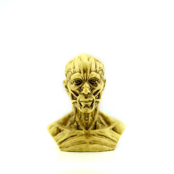 Human Model Craft Anatomy Skull Head Muscle Bone Medical Artist Drawing Study (yellow)human skeleton