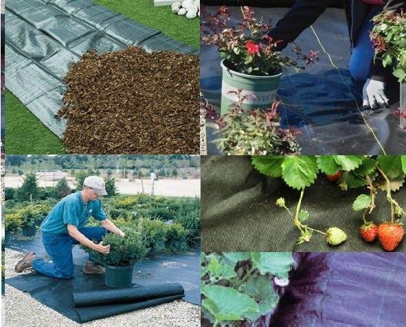 1-6 Metere width black color plastic pp anti weed mats supplier with best price by sincere factory