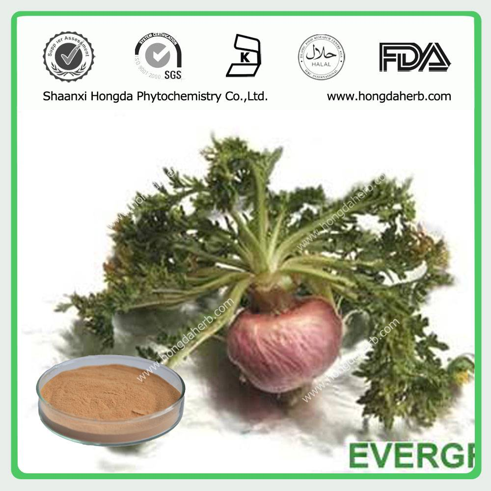 Maca Extract 100%pure powder 3:1