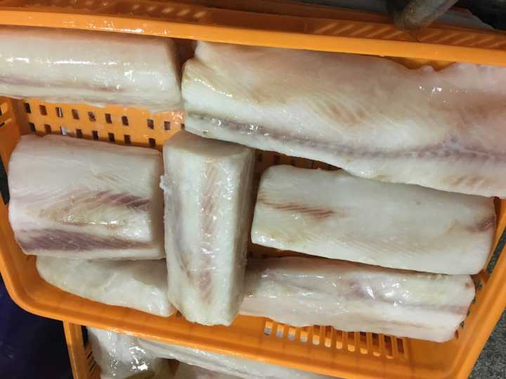 sea frozen blue shark fillet