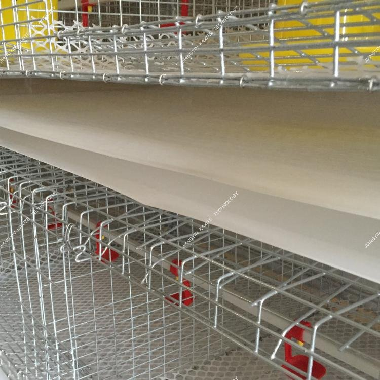 PP poultry farm manure belt quail cages/feeding system