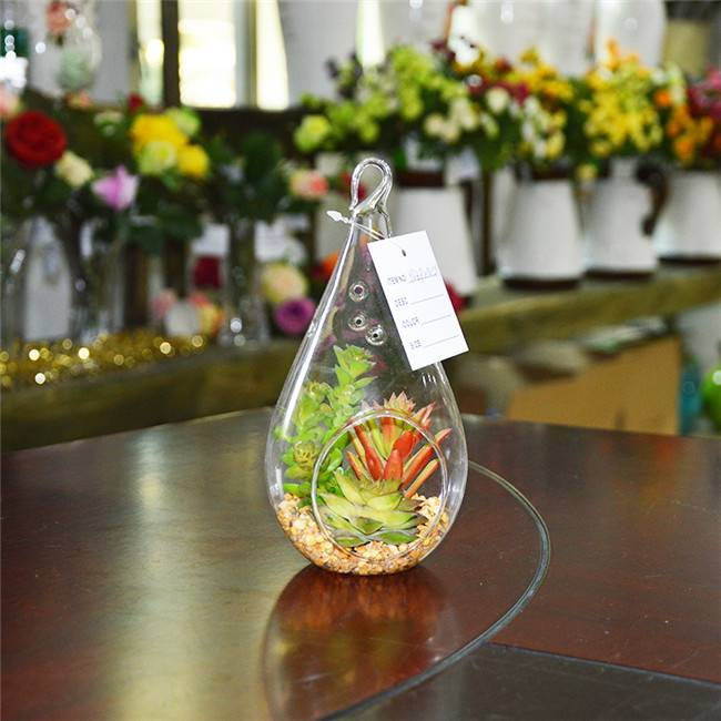Cheap Small Succulent Plants Terrarium for Home Decoration