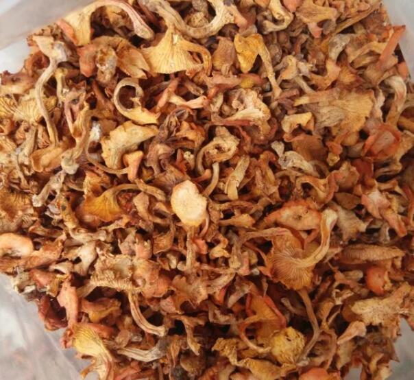 Dried mushroom fungus chanterelle