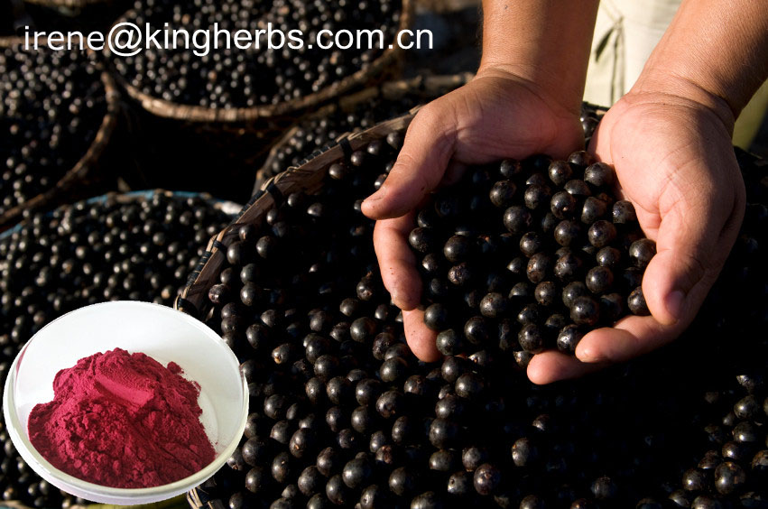 Acai Berry Extract   4:1; 10:1, 1%-15% Anthocyanidins, 10% Flavones