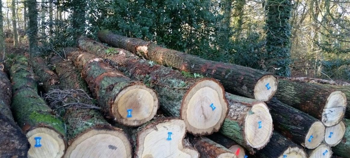 White Oak logs (small and big diameter)