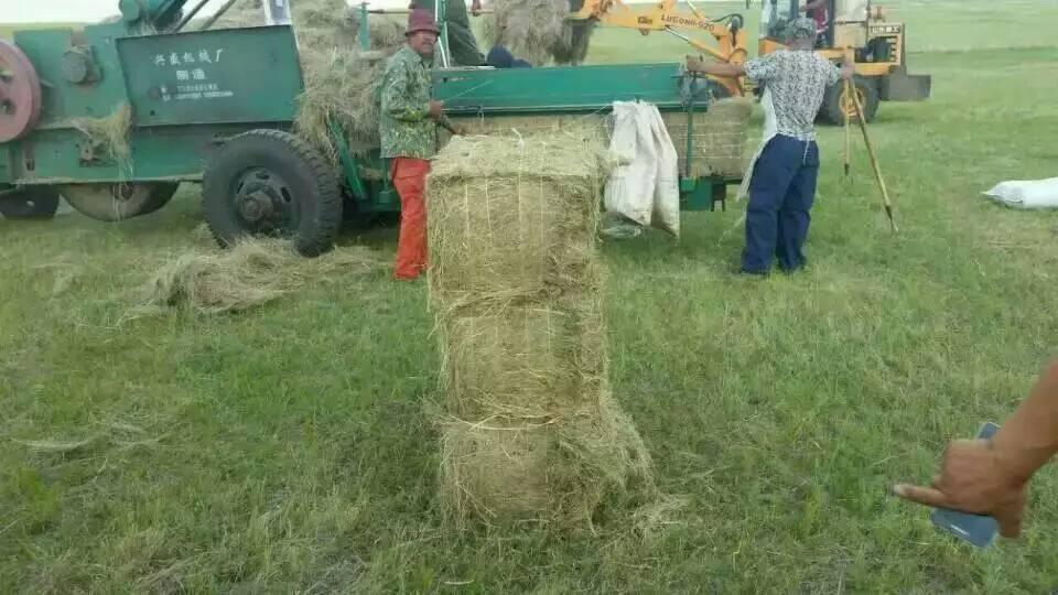 China export alfalfa hay