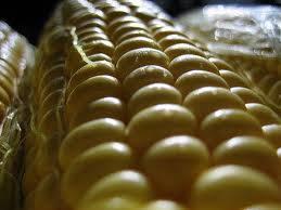 Fresh frozen Sweet Corn on cob