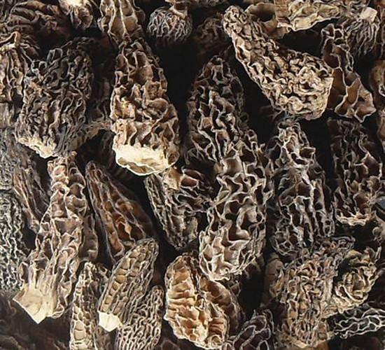Toadstool topgrade mushroom morel