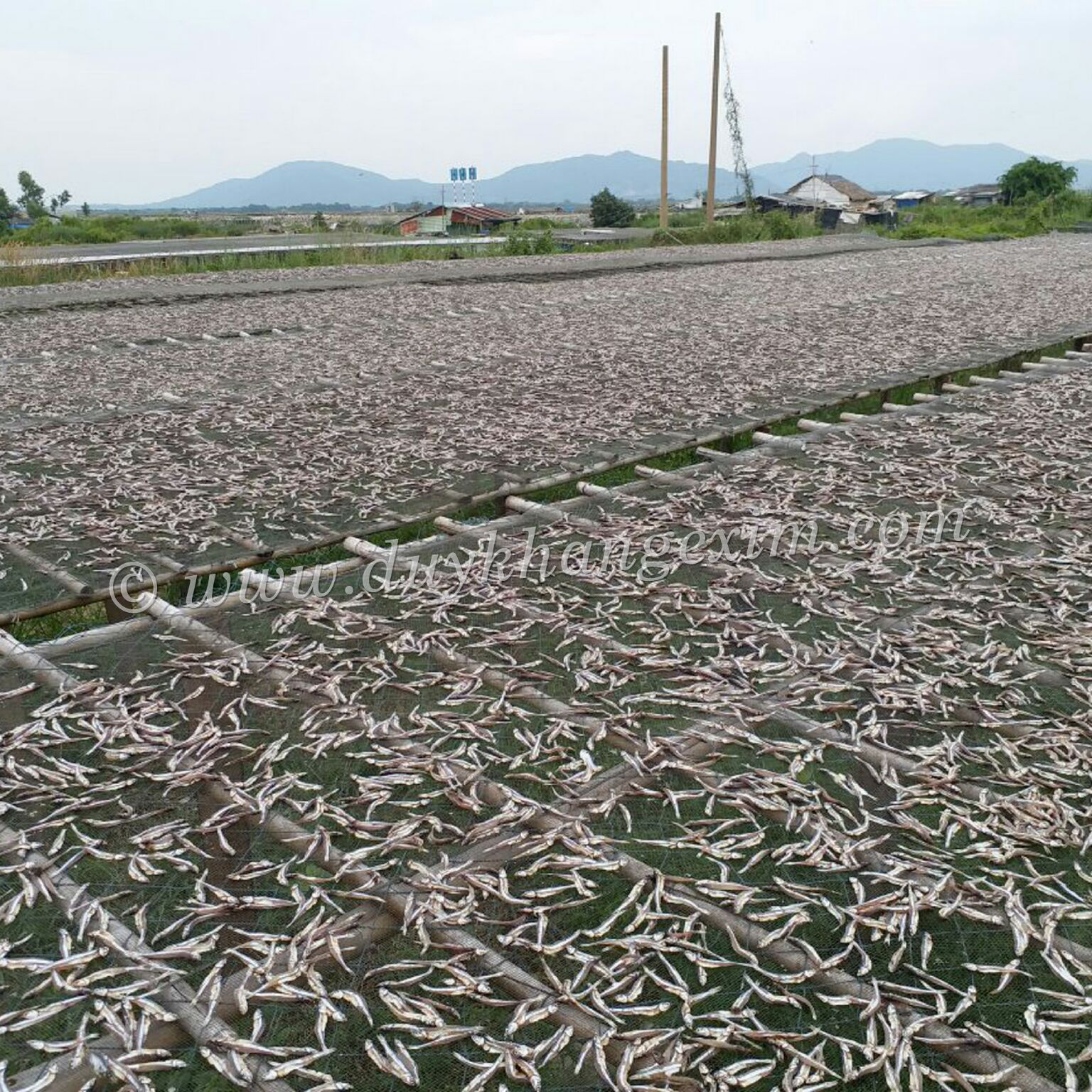 OFFER DRIED ANCHOVIES, BEST PRICE, HIGH QUALITY