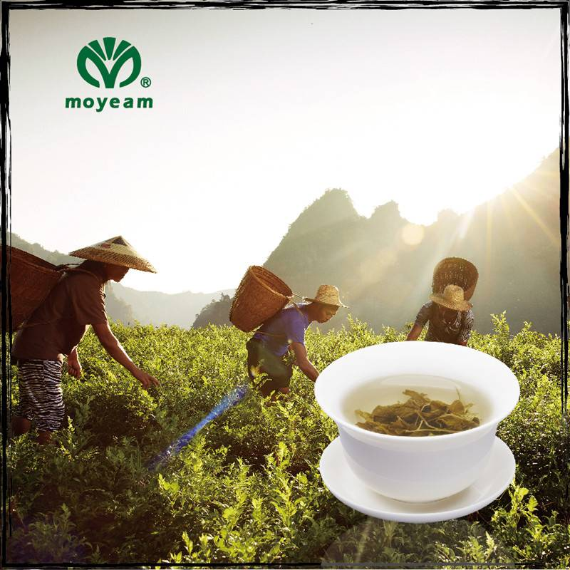 vine tea moyeam