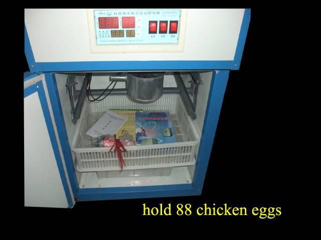 Digital chicken egg incubator