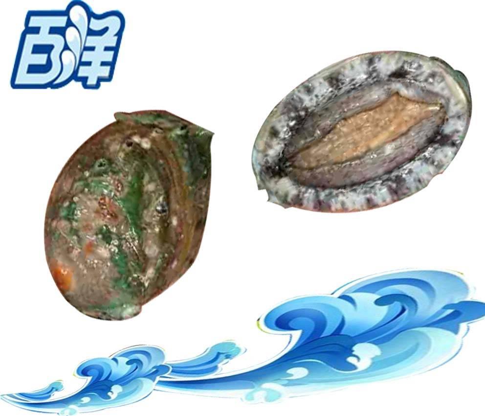 Frozen Abalone,Abalone W/R,IQF Abalone