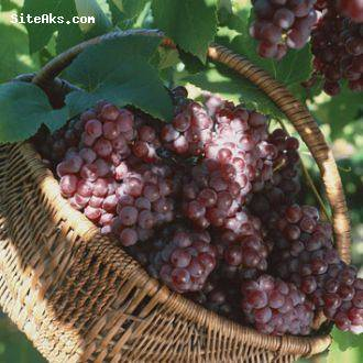 red grape juice concentrate with the best quality