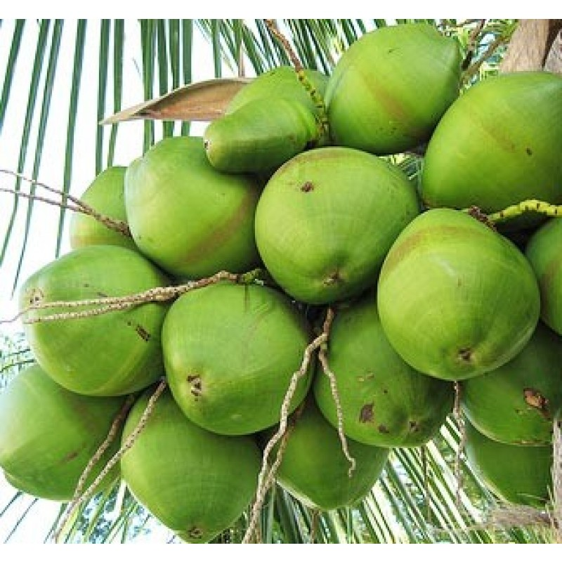 Fresh Young Coconut-A Flavour from Heaven
