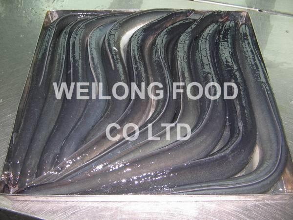 Frozen Eel (A. Japonica)