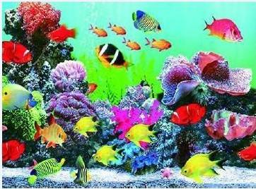 High definition 3d lenticular picture of sea world