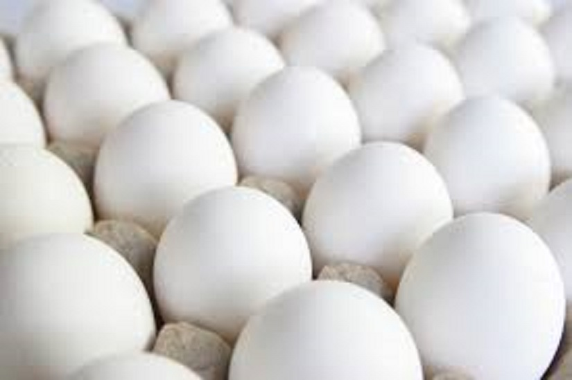 Farm Fresh Chicken Table Eggs Brown and White Shell