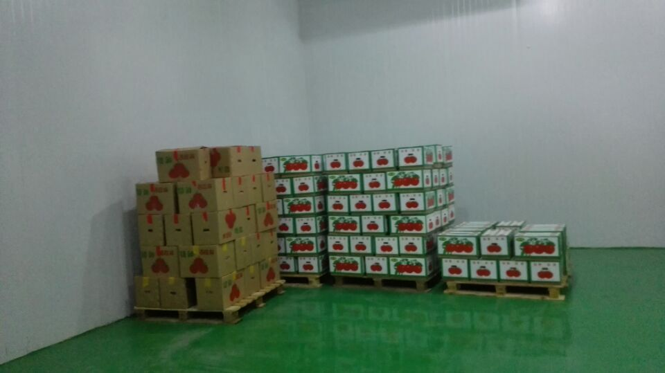 fruit cold storage,vegetable cold room,tomato cold room