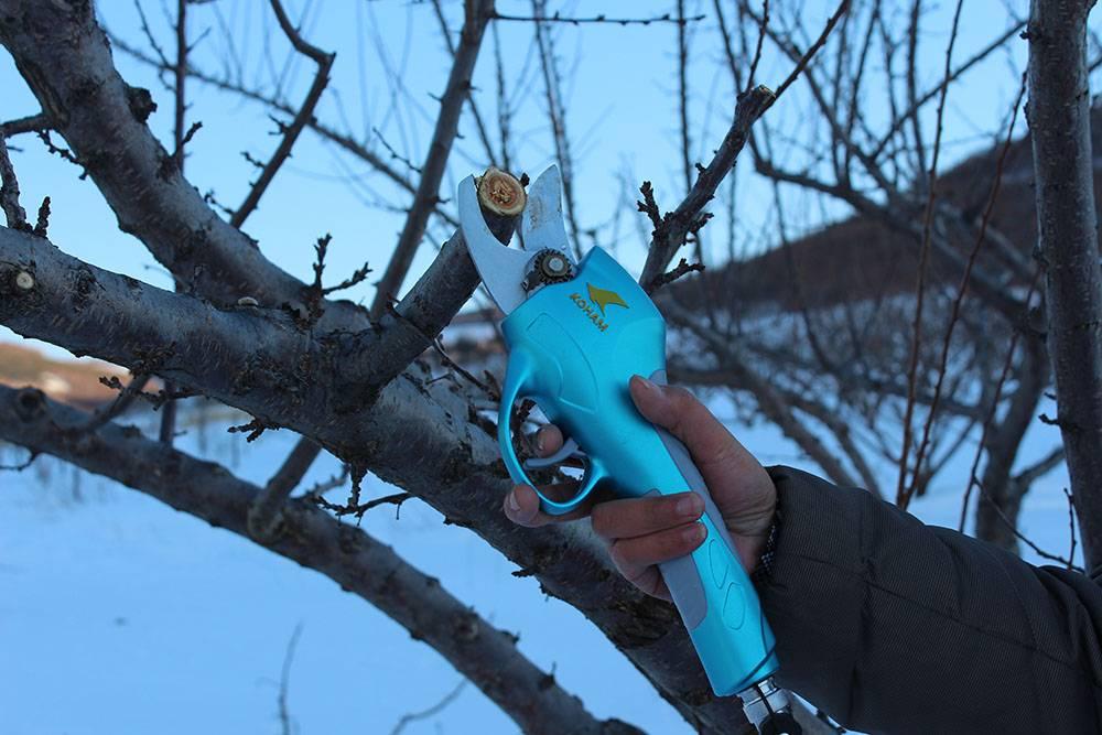 pruning shears/hand pruners
