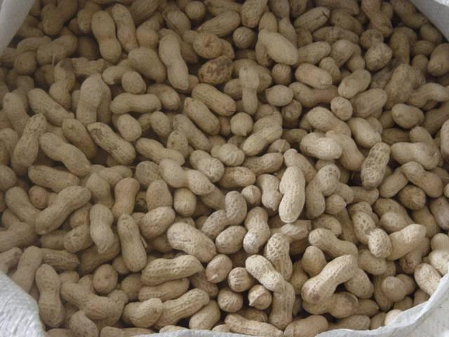 China peanut in shell, raw peanut in shell, peanuts