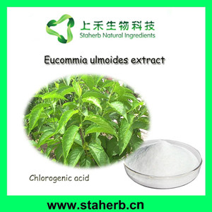 100% Pure chlorogenic acid powder 5-98%(10% 25% 30% 50% 90%) (HPLC)