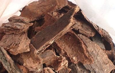 Pine Bark Extract 95% OPC