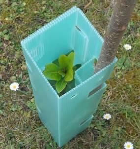 Corflute Tree Guard / Vine Guard