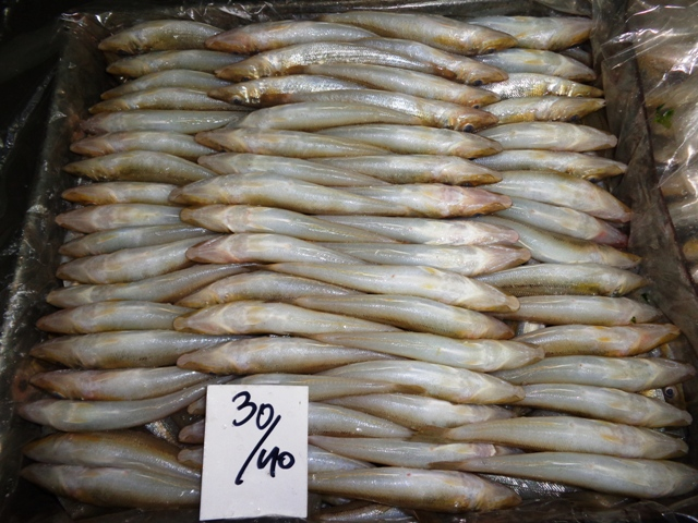 Fresh Ladyfish / Silver Whiting