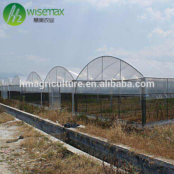 Multispan galvanized steel frame polytunnel low cost greenhouse for vegetable