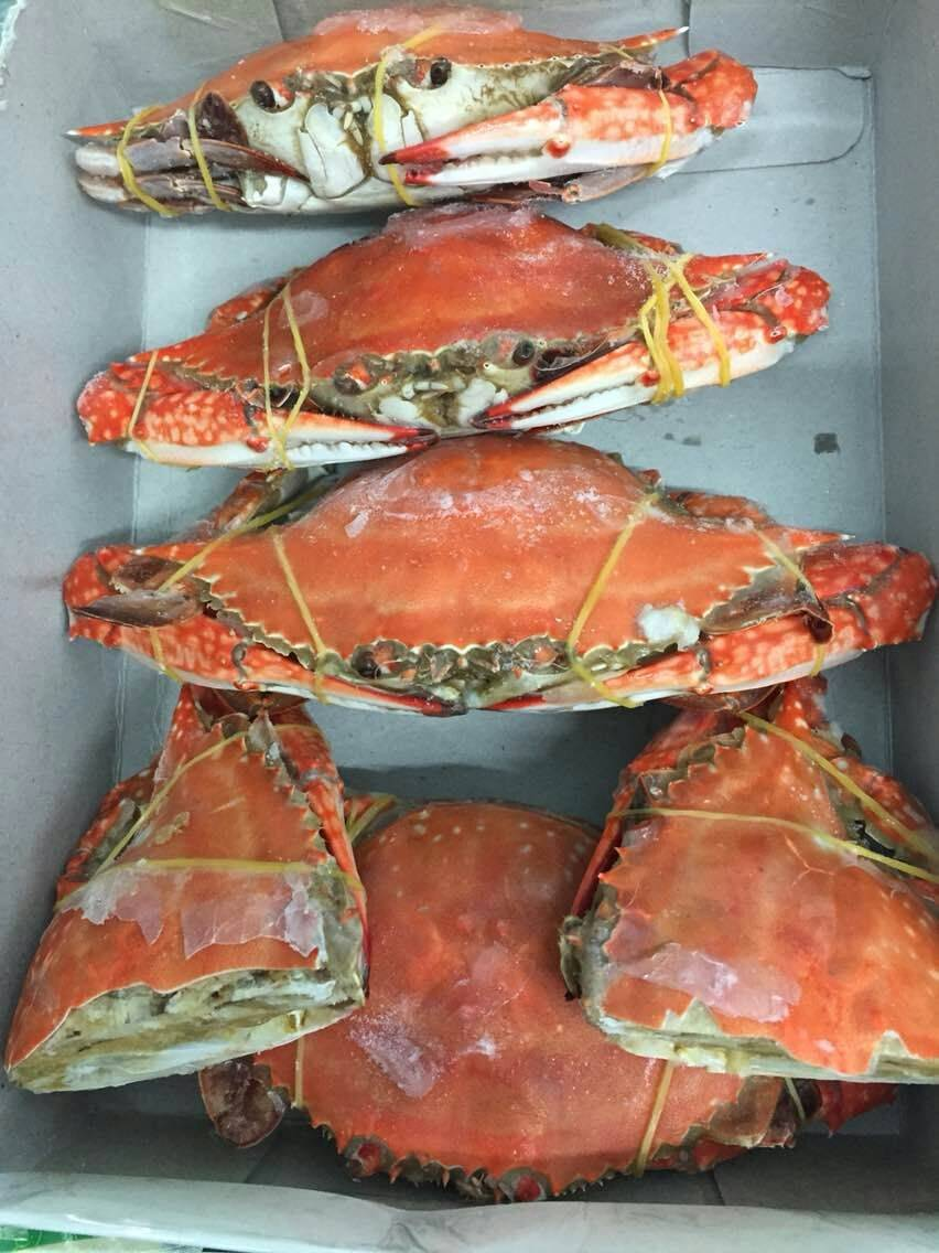 Cooked Swimming crab whole
