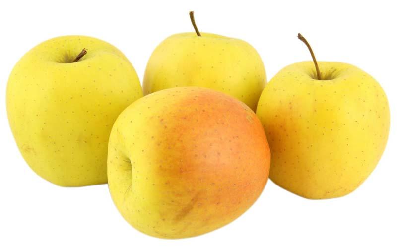 Golden, Orchard, Royal Gala, Gala Galexi,