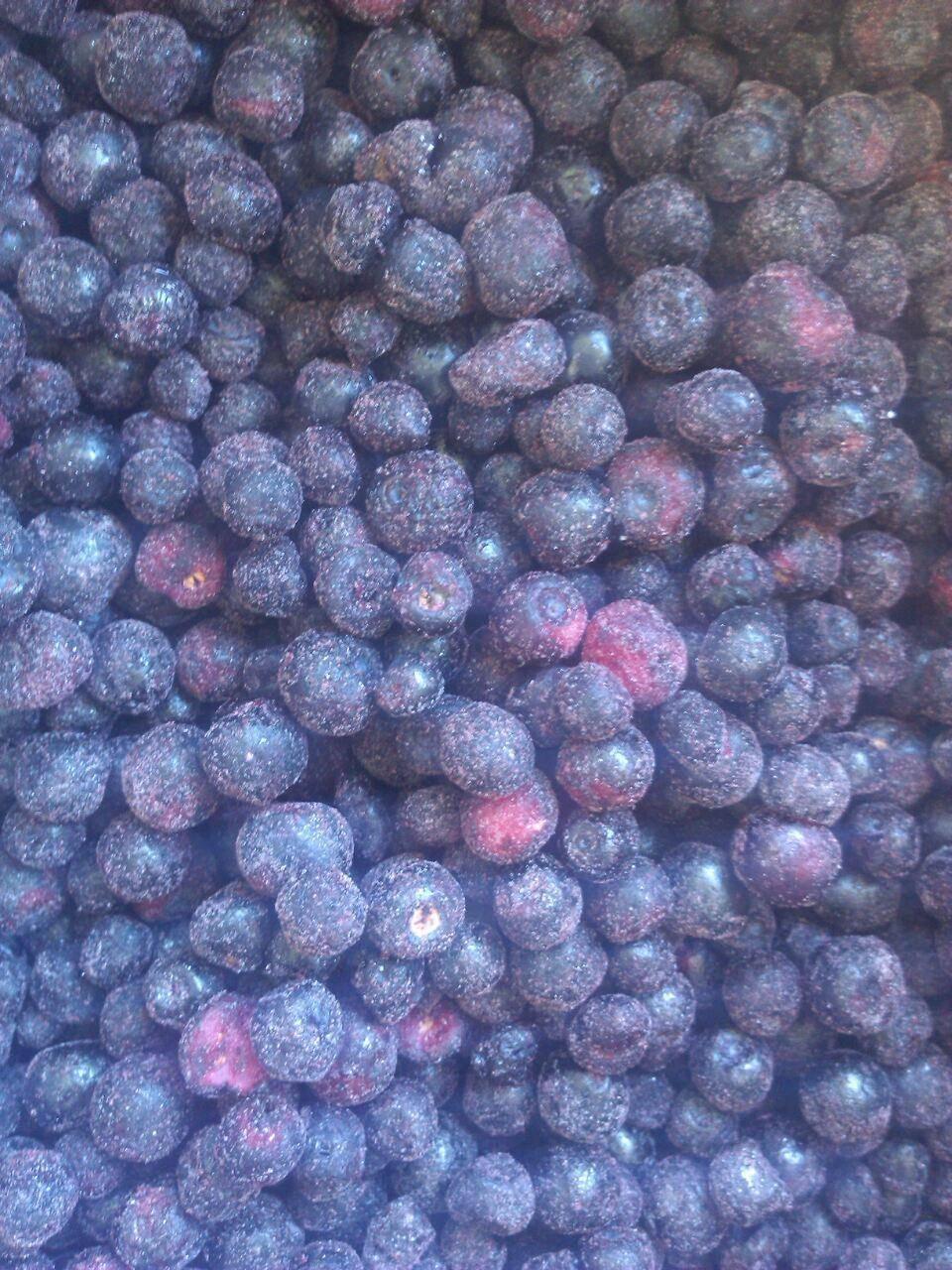 frozen bilberry (wild blueberry) A Grade