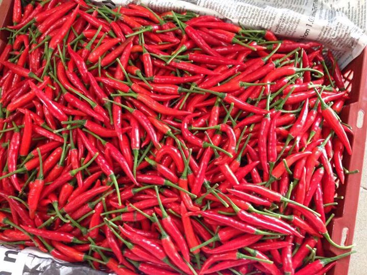 hot chili peper,dried Chili powder,Red Chili peper,Red chili powder,fresh chili peper