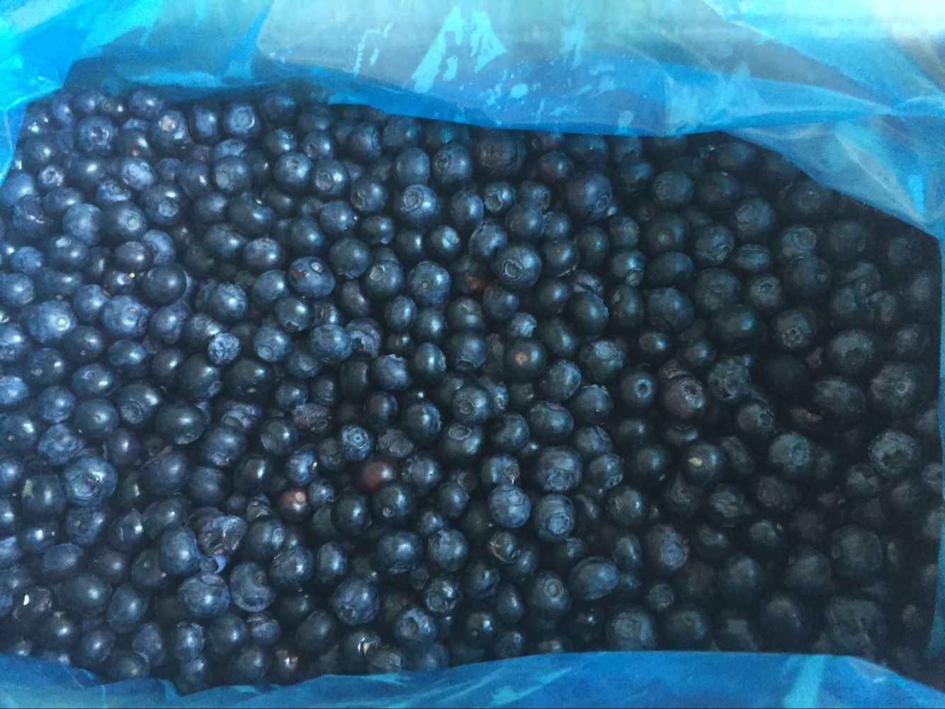 frozen blueberry, iqf blueberry, blueberry